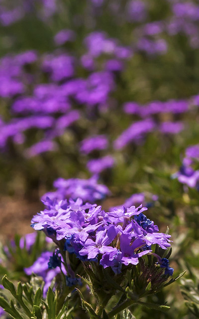 Wildflower5_1113