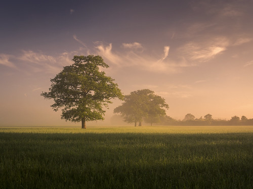 morning mist tree misty fog rural lumix countryside buckinghamshire foggy panasonic fields bucks dmc m43 mft gh3 1445mmlens bernwood damianward ©damianward micro43 microfourthirds hfs014045