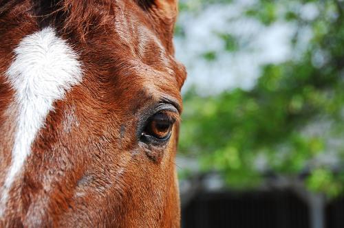 Kentucky Horse