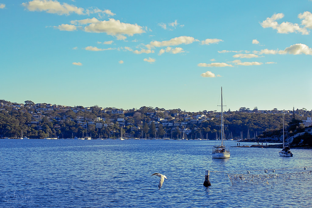The coast of Manly beach in Sydney
