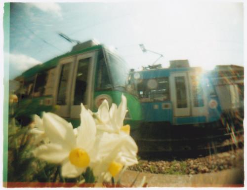 お花と世田谷線(早春)
