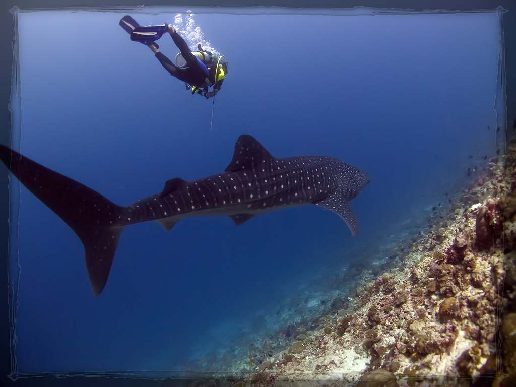 Viaje buceo Maldivas