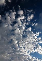 Altocumulus in a dark blue sky