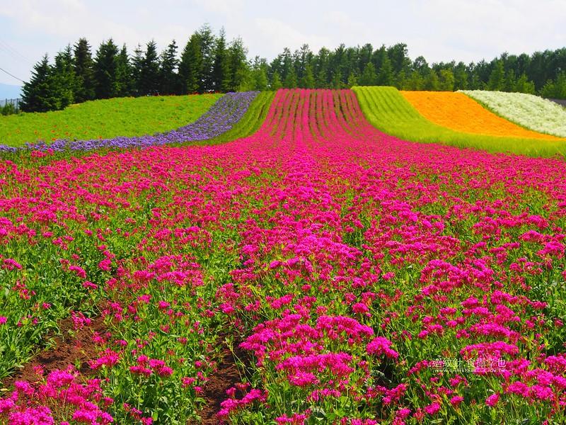 富良野 富田農場 Farm Tomita