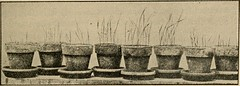 "Image from page 111 of ""Elementary principles of agriculture; a text book for the common schools"" (1915)"