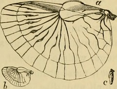 """Image from page 64 of """"British insects : a familiar description of the form, structure, habits, and transformations of insects"""" (1871)"""