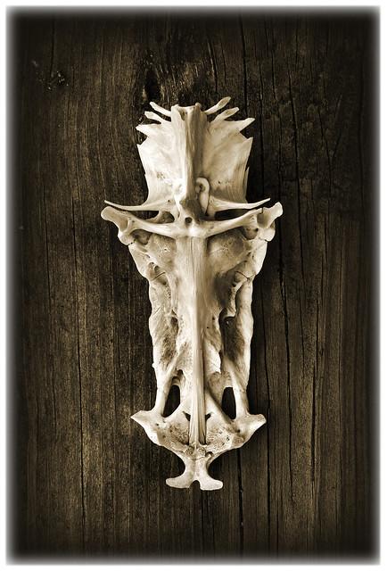 crucifix fish