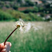 Small photo of Wish!