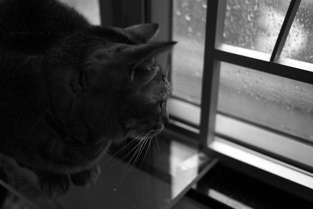 Bill@rainy day