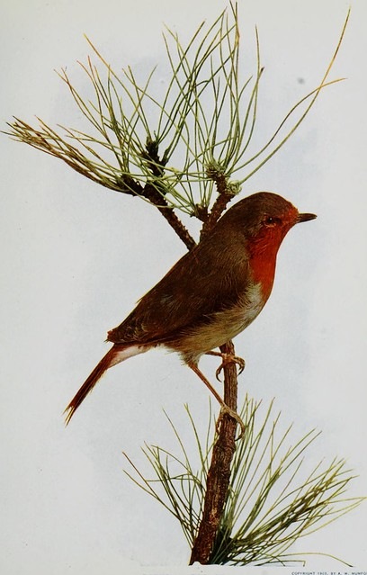 "Image from page 186 of ""Nature neighbors, embracing birds, plants, animals, minerals, in natural colors by color photography, containing articles by Gerald Alan Abbott, Dr. Albert Schneider, William Kerr Higley...and other eminent naturalists. Ed. by Nath"