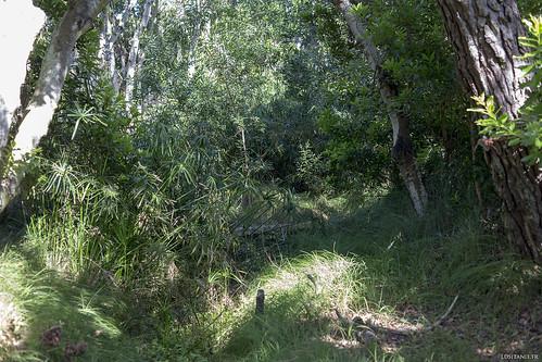 On ne le voit pas, mais une petite rivière coule en cet endroit, d'où l'abondante végétation.