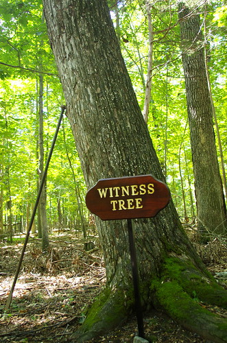 Witness tree along Chinn Ridge loop trail