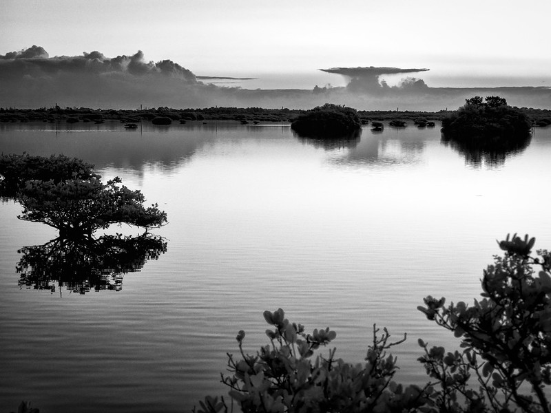 Nearby Mangroves and distant  storms
