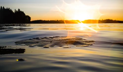 lake espoo leaf raw waterlily lily pad lehti järvi dng lumme watershot pitkäjärvi lumpeenlehti lumia1020