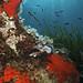 Mediterranean underwater fauna and flora
