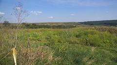 prairie, land lot, steppe, ranch, grass, tree, shrubland, plain, hill, natural environment, meadow, wilderness, biome, vegetation, rural area, savanna, grassland,
