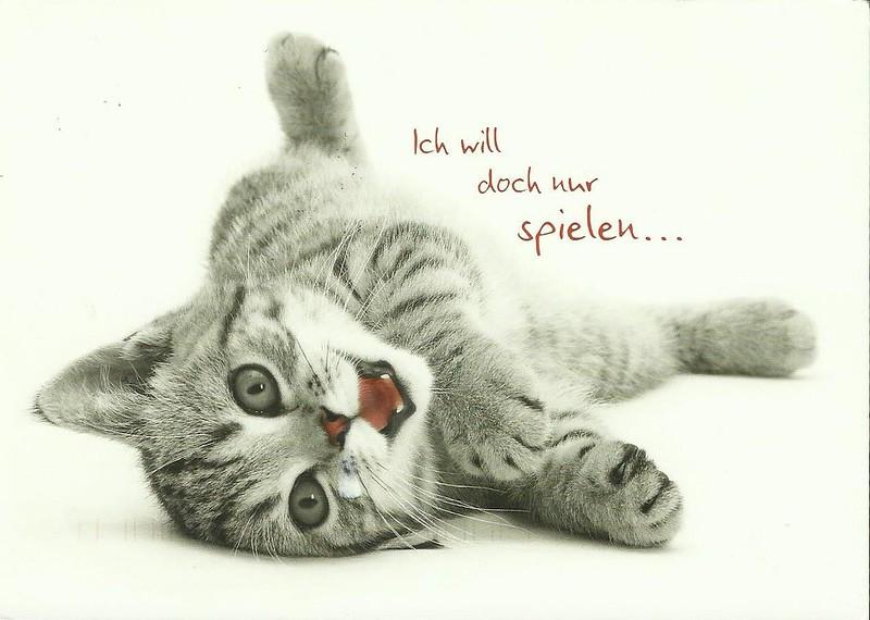 cute cat german postcard