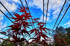 Herbst im Pflanzenhof Nordshausen