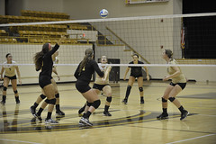 Volleyball against Lindenwood