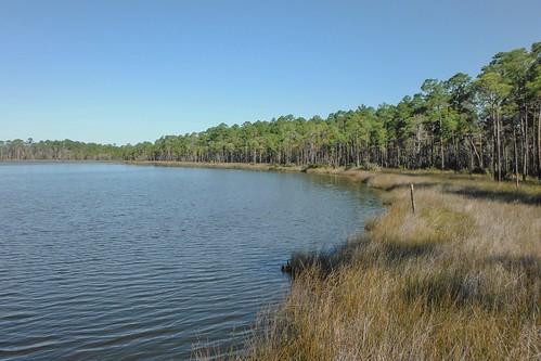 trees nature pine florida coastal waterscape gulfcoast ilobsterit