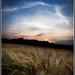 Summer Crops by SFB579 Namaste