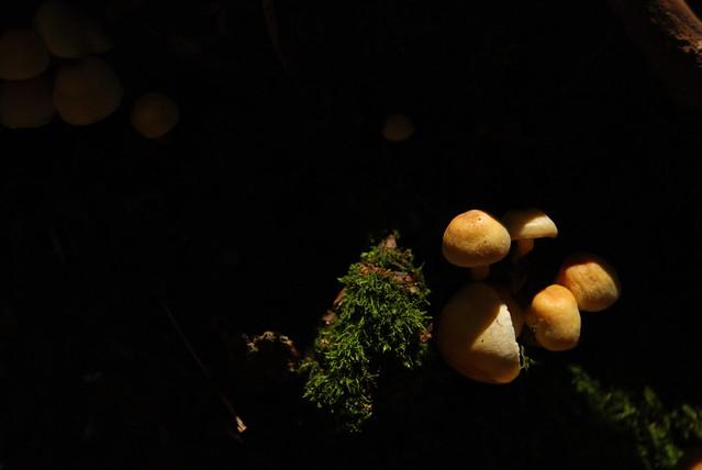 Vapec, Slovakia, mushrooms