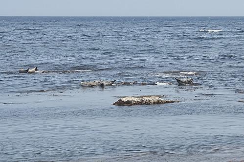 【写真】離島めぐり : 金田ノ岬