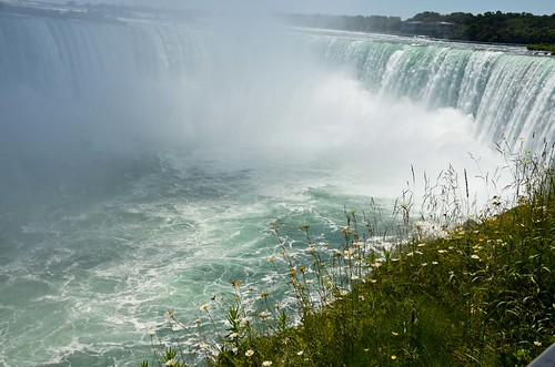Flowers at Horseshoe Falls