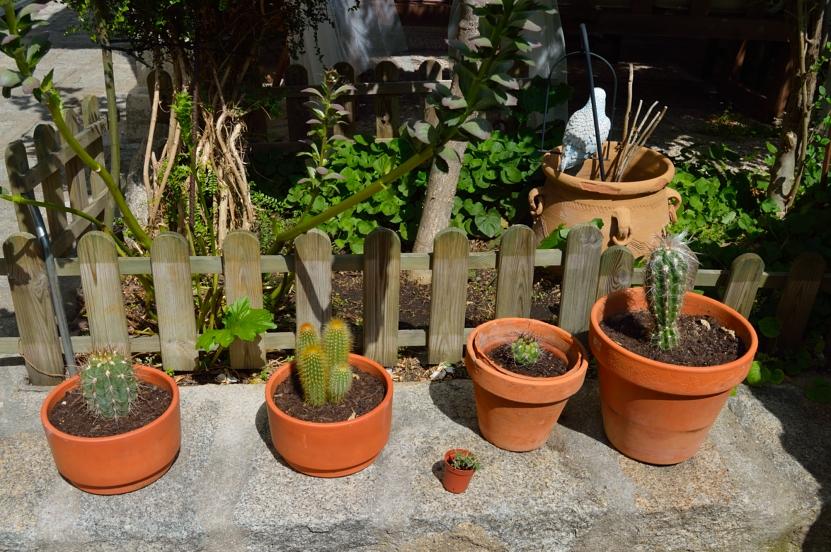 lara-vazquez-madlula-blog-deco-cactus-little-garden