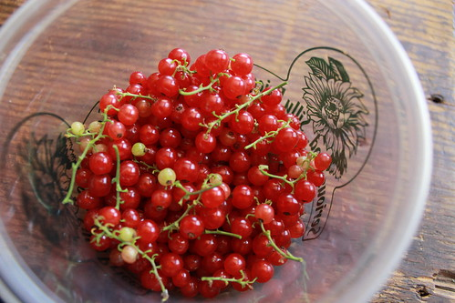 2014.07_fruit harvest red currents