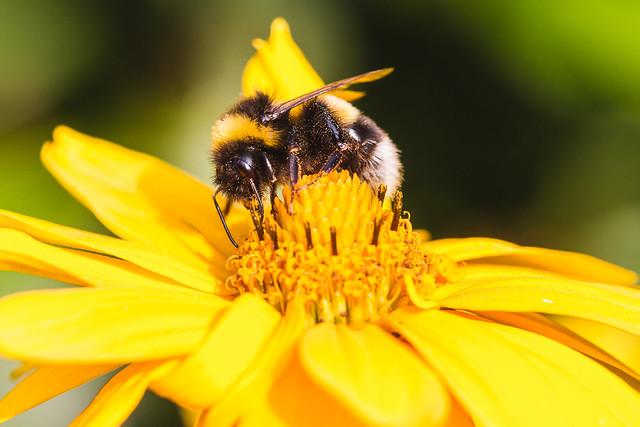 [122] Bumblebee
