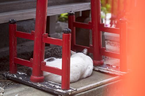 Kosuge Inari Jinjya