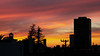 lake merritt sunset-4465