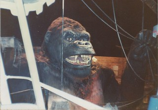 Kong (2)
