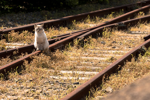 railroad station japan cat canon railway nostalgia 猫 駅 千葉 鉄道 ローカル線 localline 銚子電鉄