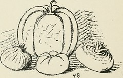"""Image from page 107 of """"Augsburg's drawing, book 2"""" (1901)"""
