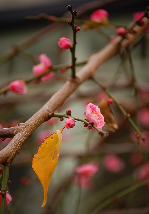 _autumn-spring_2_