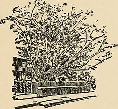 "Image from page 206 of ""Isles in summer seas : (beautiful Bermuda)"" (1913)"