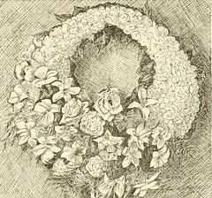 "Image from page 428 of ""The standard cyclopedia of horticulture; a discussion, for the amateur, and the professional and commercial grower, of the kinds, characteristics and methods of cultivation of the species of plants grown in the regions of the Unite"