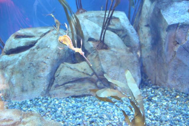 18_Georgia Aquarium