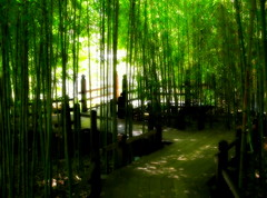 shaded pathway through the bamboo