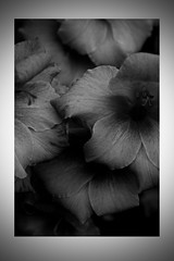 Mono Flowers - August 2014