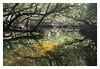 Bream Creek reflections