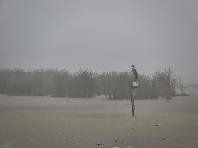 Le Marécage / the Marsh