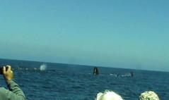 whale trip2