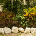 Around the Cenote 2