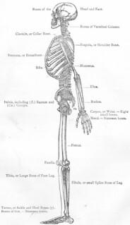 AP-skeleton