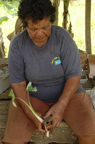 正在清理採收後芋頭的帛琉婦女。圖片提供:陳科廷。