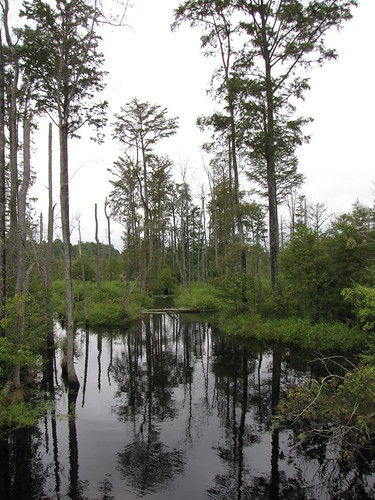 reflection northcarolina blackwater beaverdam cumberlandcounty beaverdamcreek northcarolinahighway242