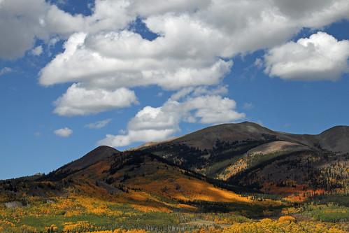 aspen aspens gold golden fall autumn color colors colorado bobrussell russell rmrussell